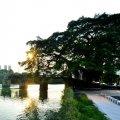 延寿桥看夕阳