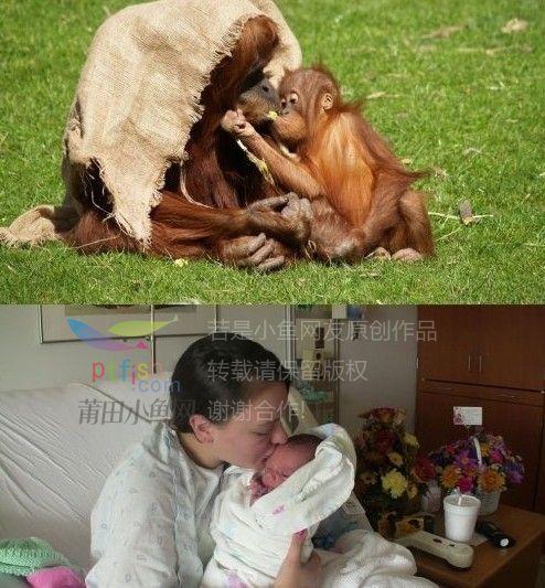 感动!人与动物相似的母爱画面