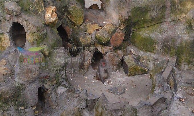 凤凰山动物园. 一>