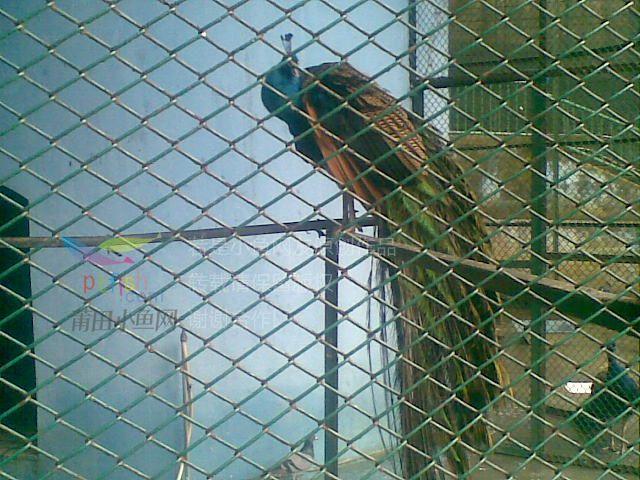 莆田凤凰山动物园