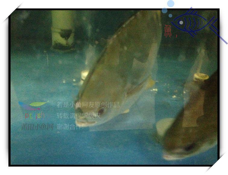 【鱼,吃莆田】金海湾酒店旁,五谷杂粮