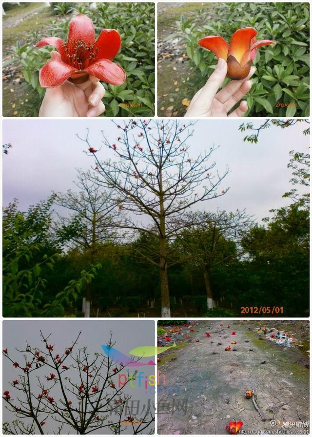 万紫千红白塘湖~一年四季风景集齐了~更新完