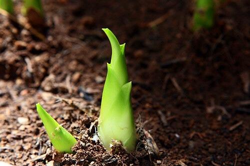 春天下雨种子发芽图片
