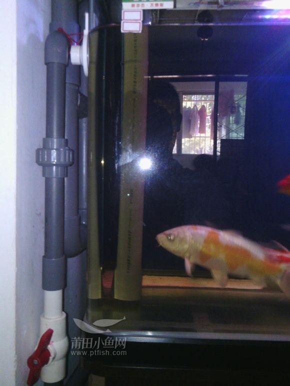 自制鱼缸底过滤虹吸系统经济实用 宠友天堂