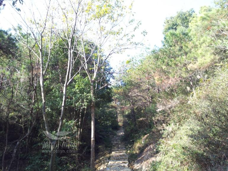莆田/2014/1/2 12:30 上传现在正式进山路了,走起来不免有些累.