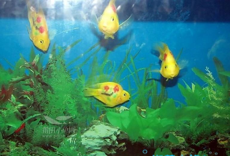 壁纸 海底 海底世界 海洋馆 水族馆 770_521