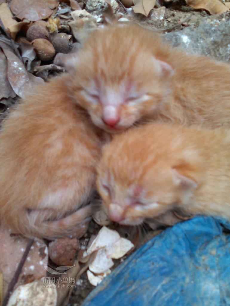 四只刚出生小猫要的自己过来拿