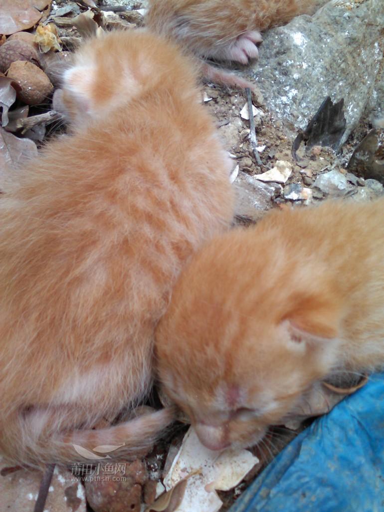 四只刚出生小猫要的自己过来拿图片