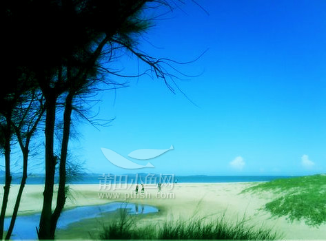 微信头像海边风景贝壳