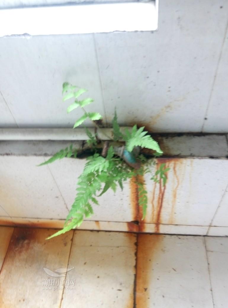室内绿植?
