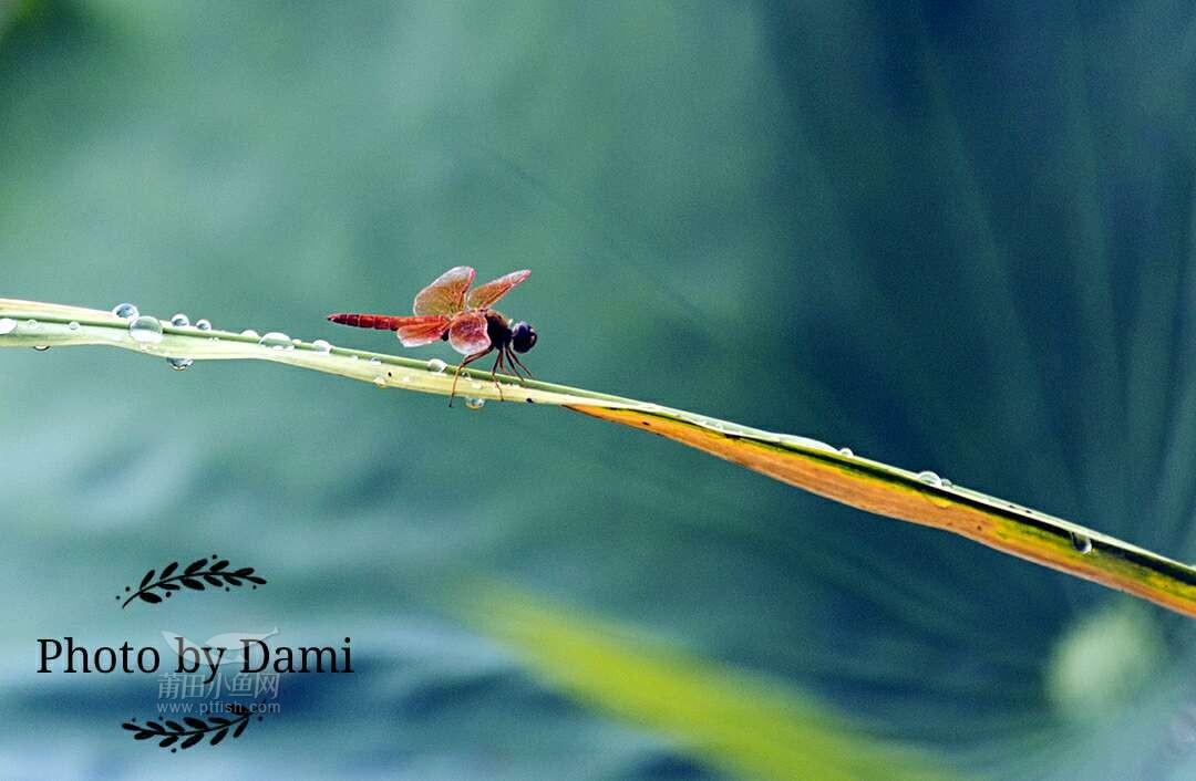 后宫荷花池,荷叶上点立的蜻蜓,荷花中飞舞忙碌着的蜂儿,荷花池上停