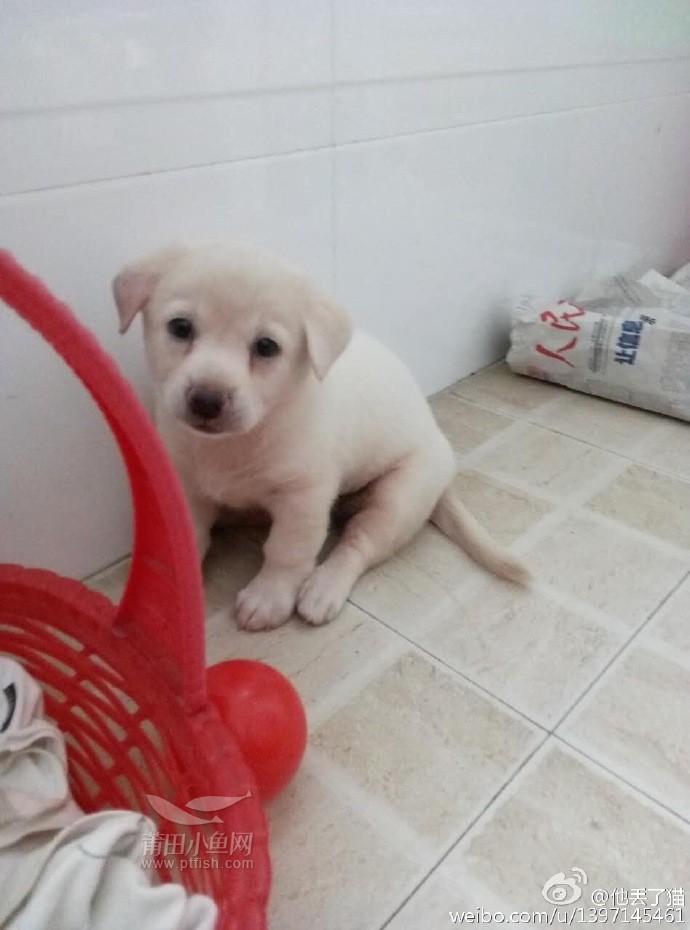 聪明的小白狗寻找主人啦