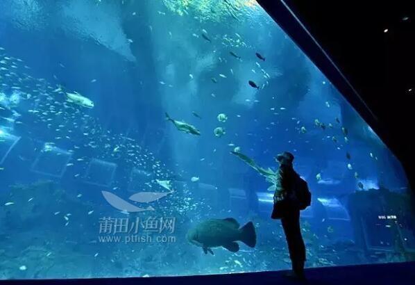 或是远途跋涉驱车到珠海长隆海洋王国欣赏: 莆田万达广场水母馆   本