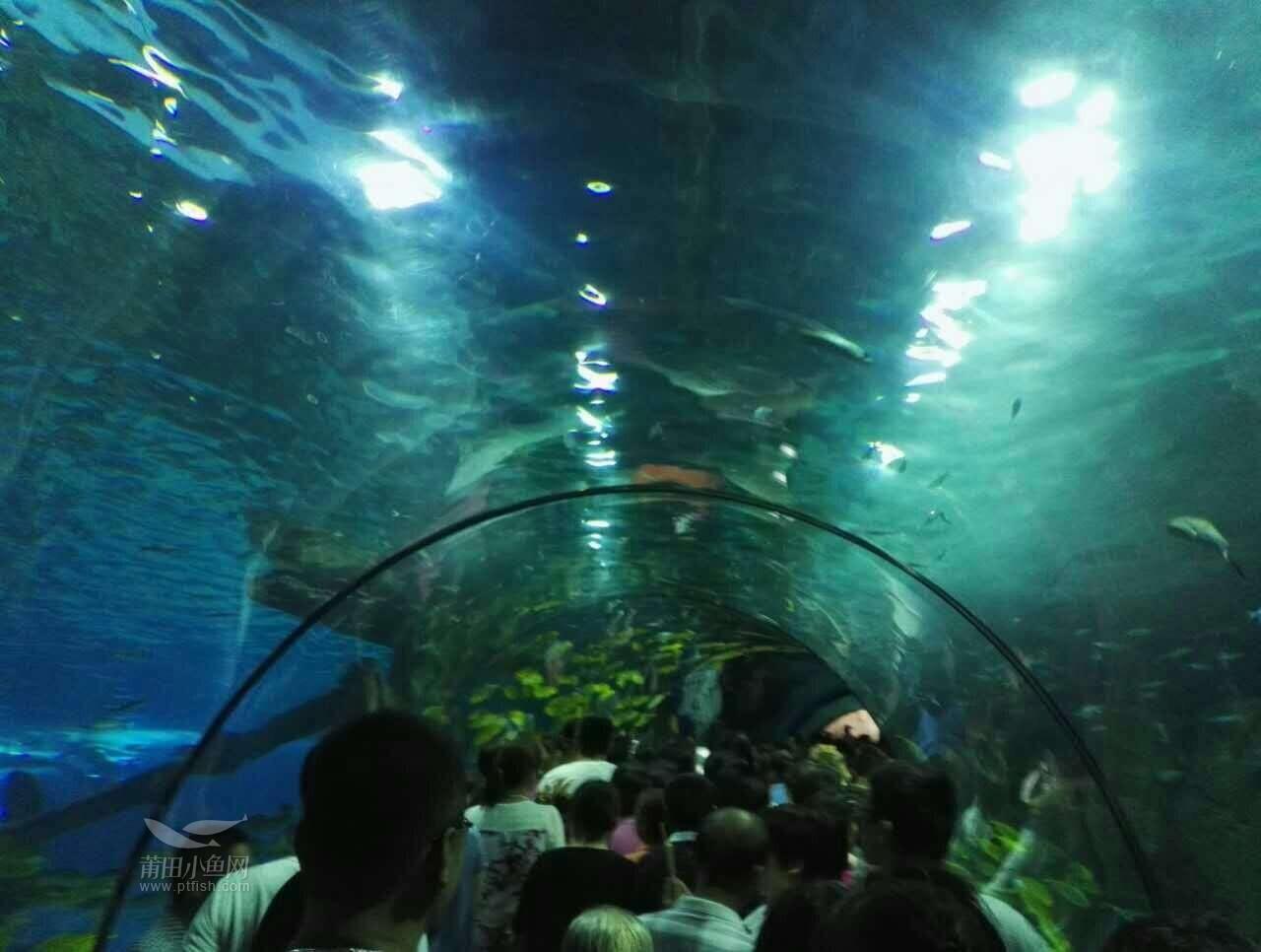 [旅游体验] 罗源湾海洋世界