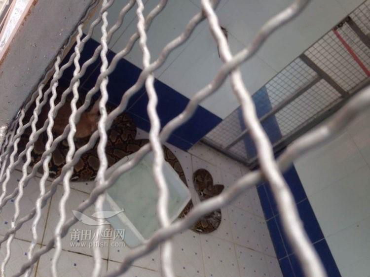 凤凰山的动物园,这些动物懒洋洋的毫无活力与生气,一