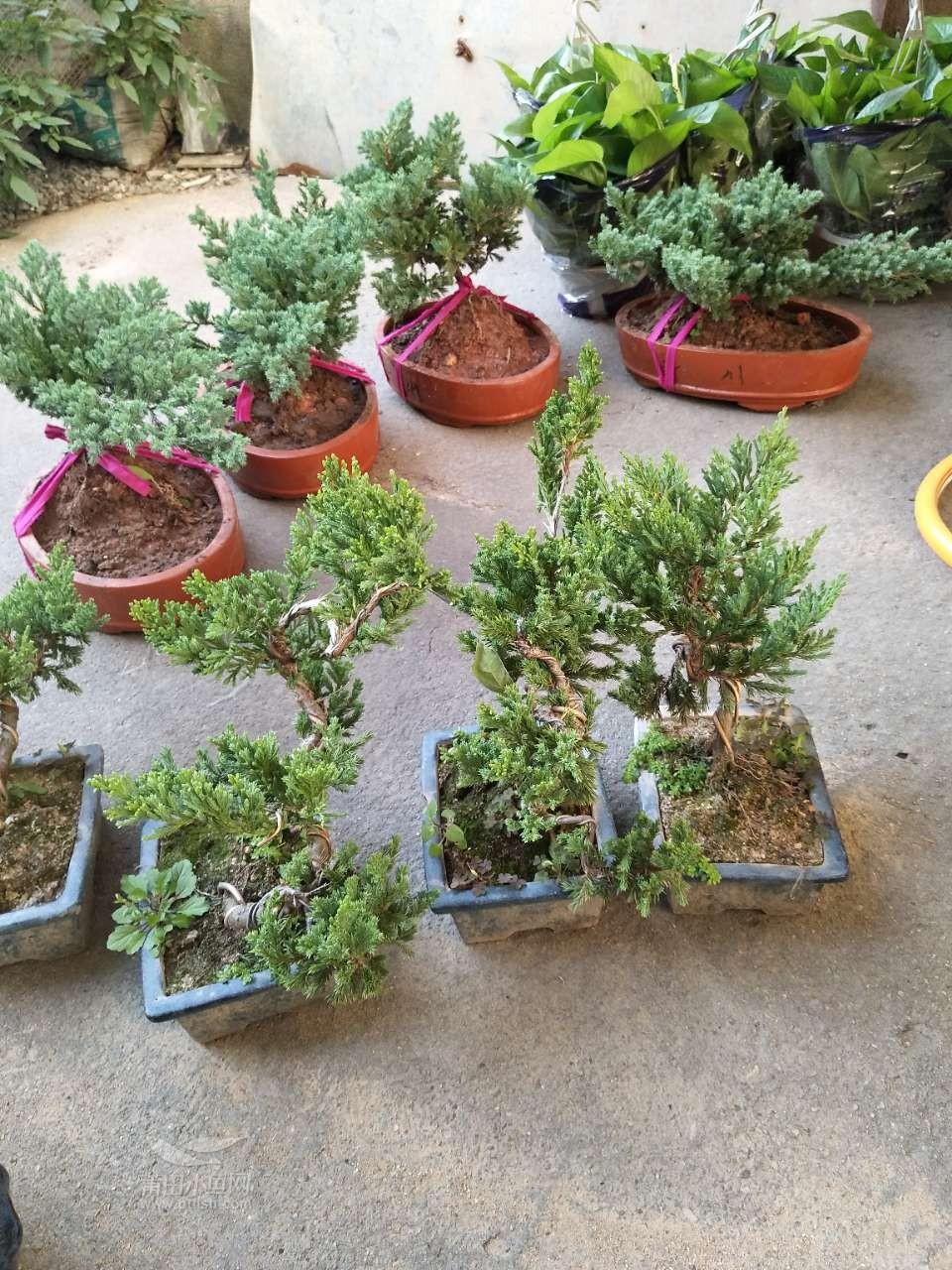 专业实木花架,贡案,小盆景,红木小件