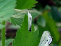 摄影大赛投稿119号作品之二十九:《蝴蝶群英会》